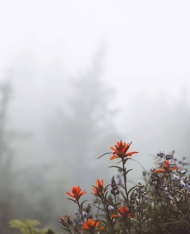 можно фото цветы в тумане вариант использовать опоры