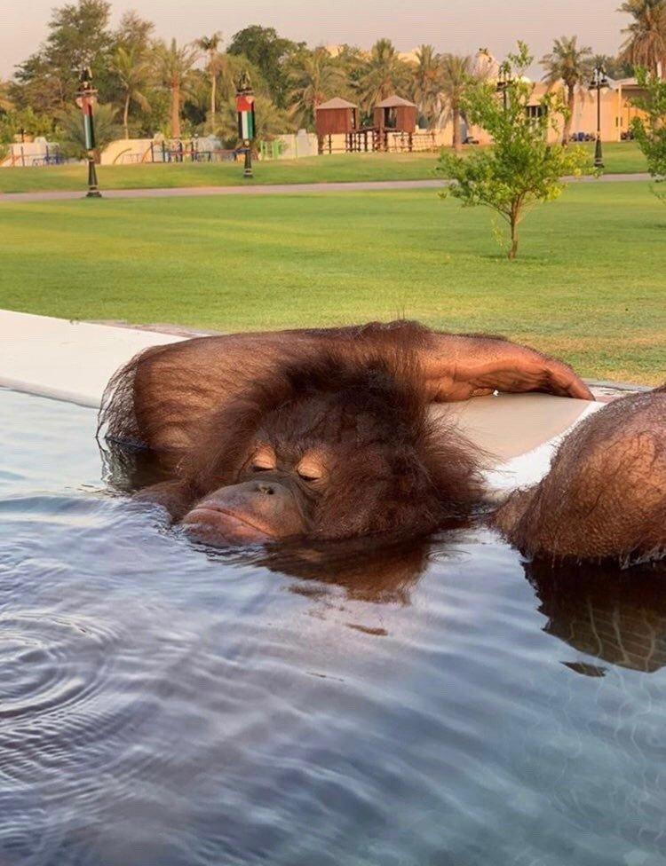 750x976, 196 Kb / обезьяна, отдых, бассейн