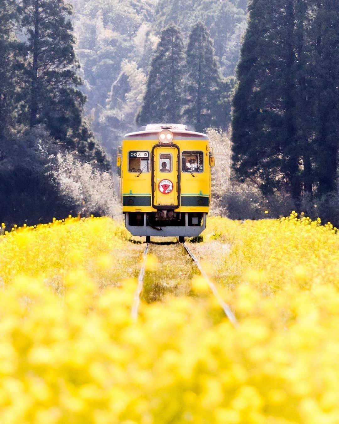 1080x1350, 204 Kb / желтый, вагон, поезд, поле, лес